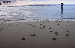 Đà Nẵng: Hội nghị về bảo tồn rùa biền