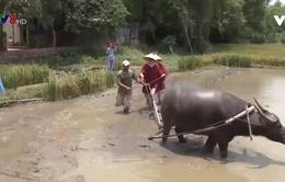 Quảng Nam hỗ trợ khởi nghiệp nông nghiệp