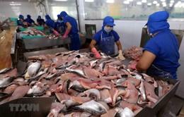 Xuất khẩu cá tra lao dốc