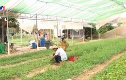 Phong trào trồng rau hữu cơ ở Campuchia