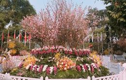 Nhiều hoạt động hấp dẫn tại Lễ hội Hoa anh đào Nhật Bản
