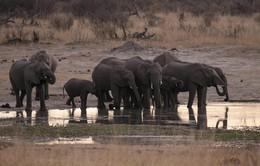 55 con voi chết đói ở Zimbabwe do hạn hán kỷ lục