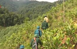 Thừa Thiên - Huế: Chung sức bảo vệ rừng, thắt chặt tình quân dân