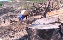 Bình Định: Trồng lại 125 ha rừng bị phá tại Dự án phong điện Phương Mai 1