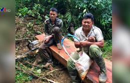Gia Lai bắt giữ nhóm lâm tặc tàn phá rừng