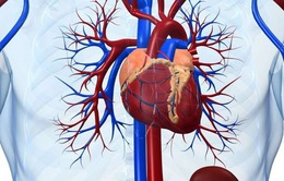 Viêm cơ tim cấp - Một số điều bệnh nhân cần biết