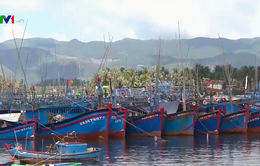 Bình Định chống khai thác thủy sản bất hợp pháp