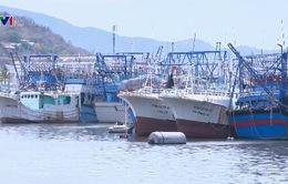 Đấu giá tàu cá để xử lý nợ vay theo Nghị định 67