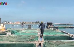 Quảng Ngãi: Cảnh báo rủi ro nuôi trồng thủy sản mùa mưa bão