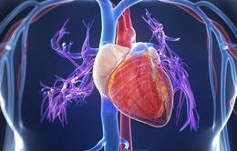 """Điều tra dịch tễ thông tin """"virus"""" gây bệnh viêm cơ tim"""