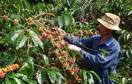 Ngành cà phê đặt mục tiêu kim ngạch xuất khẩu đạt 6 tỷ USD vào năm 2030