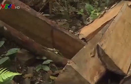 Quảng Bình khởi tố trạm trưởng kiểm lâm để xảy ra phá rừng