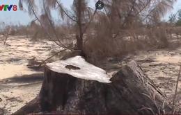 Dự án điện gió chưa có mà rừng phòng hộ đã bị phá sạch
