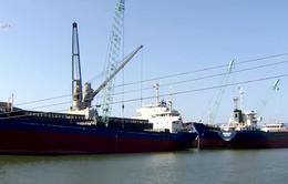 Phương án sử dụng bùn nạo vét cảng Quy Nhơn