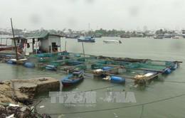 Khánh Hòa triển khai quyết liệt công tác ứng phó với bão số 5