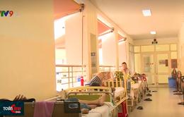 Báo động số ca bệnh sốt xuất huyết ở người lớn gia tăng tại khu vực phía Nam