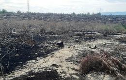 Tạm dừng dự án phong điện Phương Mai 1 để xử lý vụ phá hoại 140 ha rừng phòng hộ