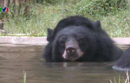 Ngôi sao Hollywood gốc Việt Maggie Q lên ý tưởng bảo vệ gấu ở Việt Nam