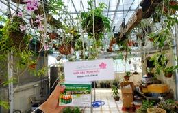 Hối hận vì trồng phong lan sai cách ngay tại nhà