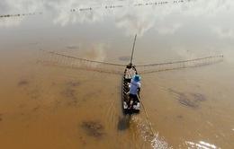 Nhọc nhằn nghề đẩy côn mùa nước nổi