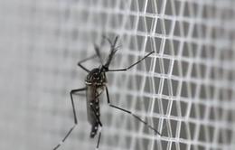 Tìm thấy loại vi khuẩn ngăn chặn muỗi truyền bệnh sốt rét