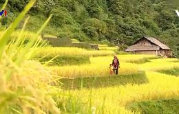 Không gian văn hóa du lịch độc đáo Hoàng Su Phì