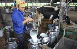 Tháng 10, lần đầu tiên Việt Nam xuất khẩu sữa chính ngạch sang Trung Quốc