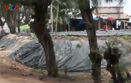 Quảng Ngãi: Nhức nhối tình trạng xâm chiếm rừng phòng hộ xây hồ nuôi tôm