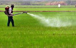 Thái Lan cấm 3 hóa chất nông nghiệp độc hại