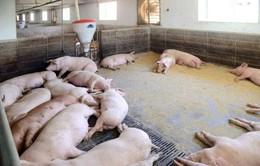 OIE: Không nước nào miễn nhiễm trước nguy cơ lây bệnh tả lợn châu Phi