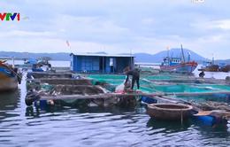 Khánh Hòa cấm biển, cho học sinh nghỉ 2 ngày tránh bão số 6