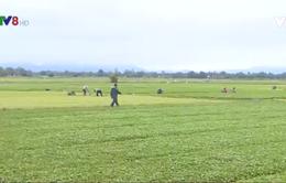 Thừa Thiên - Huế phát triển nông nghiệp xanh