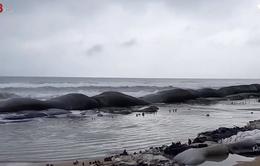 Quảng Nam: Bờ biển nhiều nơi tiếp tục sạt lở sau bãosố 6