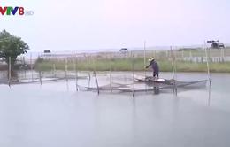 An toàn nuôi trồng thủy sản mùa mưa lũ