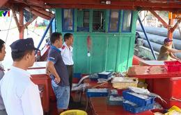 Kiên Giang: Siết chặt truy xuất nguồn gốc thủy sản