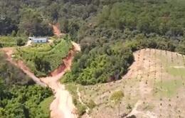 Lâm Đồng khẳng định Đại Hải farmstay phân lô đất rừng trái phép