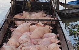 Bắt giữ tiêu hủy hơn 3,7 tấn heo vận chuyển từ Campuchia vào Việt Nam
