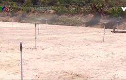 Nguy cơ thiếu nước vụ tỏi đông xuân ở Lý Sơn