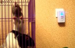 Máy đuổi chuột giả rao bán tràn lan trên mạng uy tín