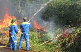 Diễn tập phòng cháy chữa cháy rừng cấp quốc gia