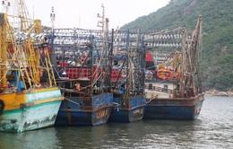 Vẫn chưa bán bảo hiểm trở lại cho tàu cá 67