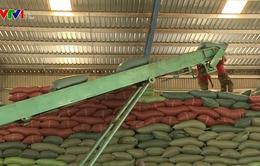 Đầu tư hiệu quả logistics để nâng cao giá trị nông sản