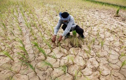 Campuchia chuẩn bị đối phó với khô hạn