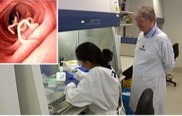 Protein từ sán dây có khả năng điều trị ung thư