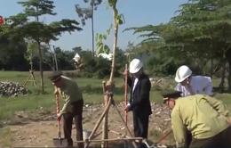 Đà Nẵng ra quân trồng cây hưởng ứng ngày lâm nghiệp Việt Nam