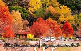 Đài Loan (Trung Quốc) mùa thu, lãng mạn mùa lá đỏ