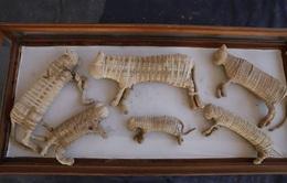 Lần đầu tiên phát hiện 2 xác ướp sư tử ở Ai Cập