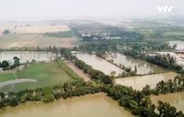 Xử lý vụ múc đất ruộng bán cho lò gạch tại Thuận Thành, Bắc Ninh