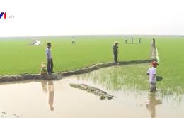 Khảo sát mô hình nông nghiệp hữu cơ