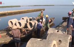 Thừa Thiên - Huế tái tạo nguồn lợi thủy sản